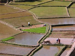 China - Rice Field